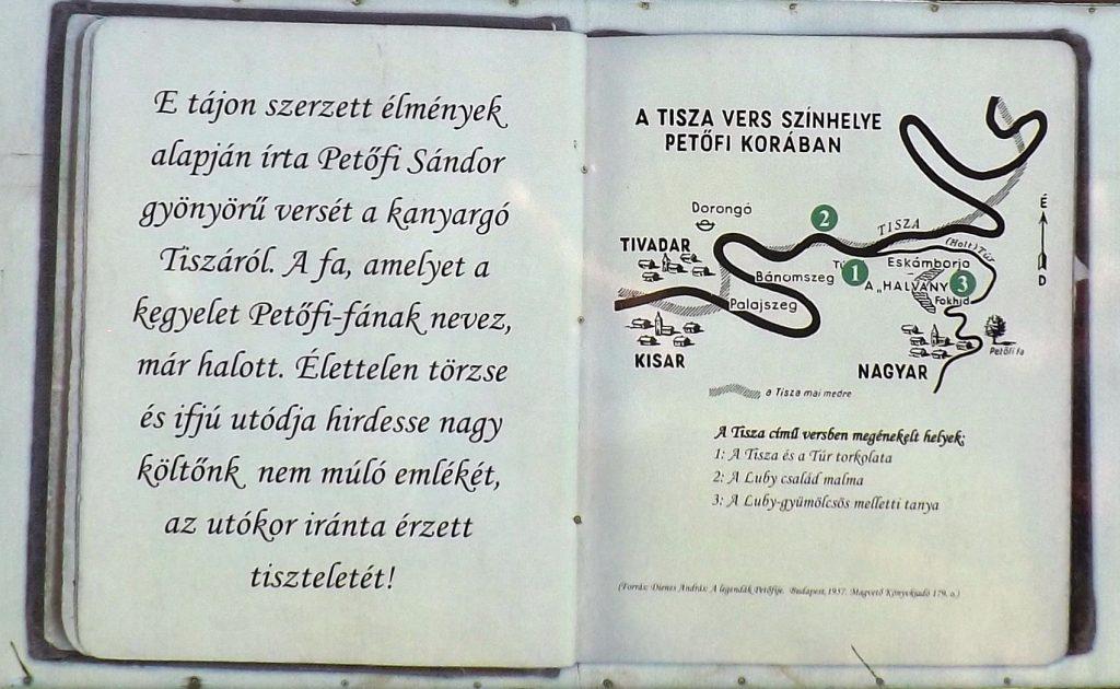 Szatmárcseke, Petőfi fája
